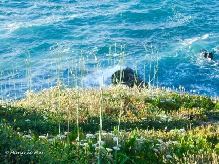Abraços da Natureza, 2011