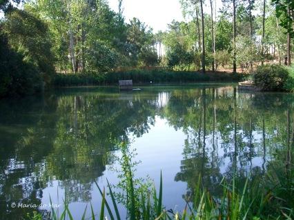 O Sereno Espelho do Parque, 2010