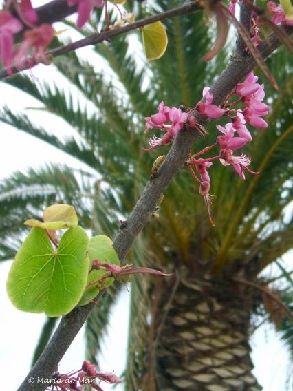 Primavera nas Descobertas, 2016