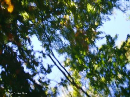 Reflexos no Bosque, 2015