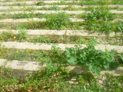 A Escadaria Selvagem, 2014