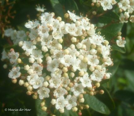 flores-beijos-da-vida-2014