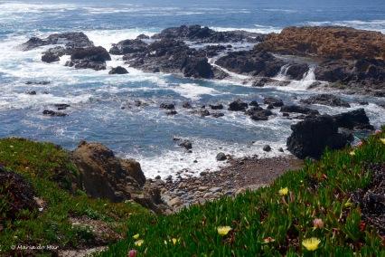 abraco-florido-de-mar-2016