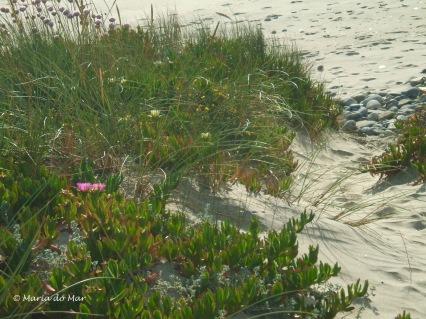 caminhos-na-praia-2014