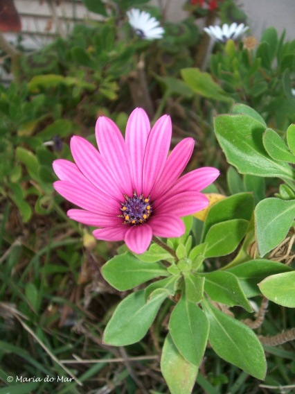 flor-de-luz-2016