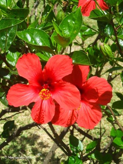 flores-vizinhas-2015