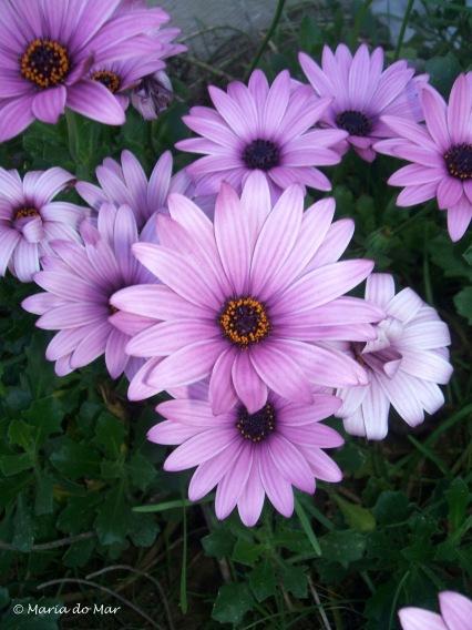 flores-de-meio-dia-2014