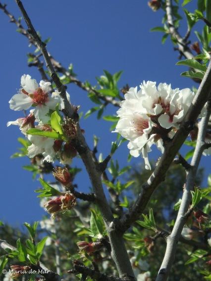 flores-do-coracao-2014