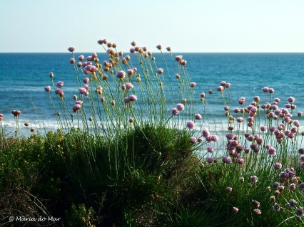 jardim-cor-de-rosa-2014
