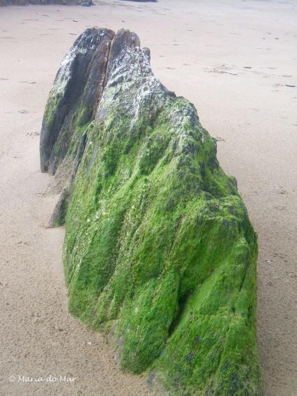 rocha-caminhante-2012