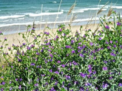 praia-florida-2012