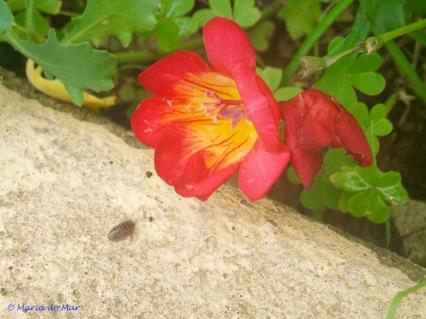 flor-contemplativa-2013