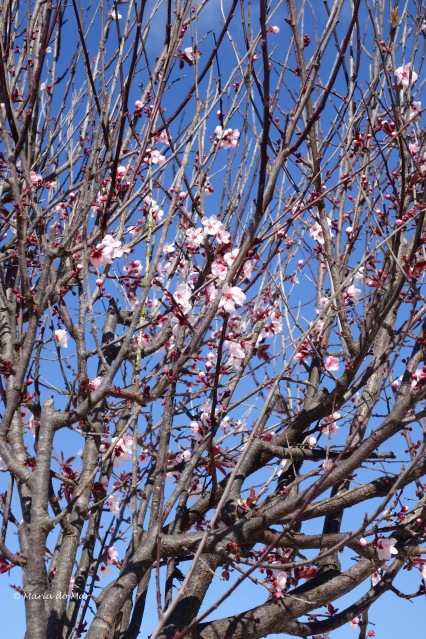 flores-de-primavera-2016